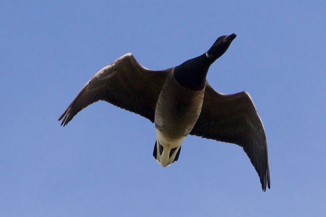 Wonderlijk beestje, zo helemaal naar de kop van Siberie vliegen om daar je portie ellende te ontmoeten.