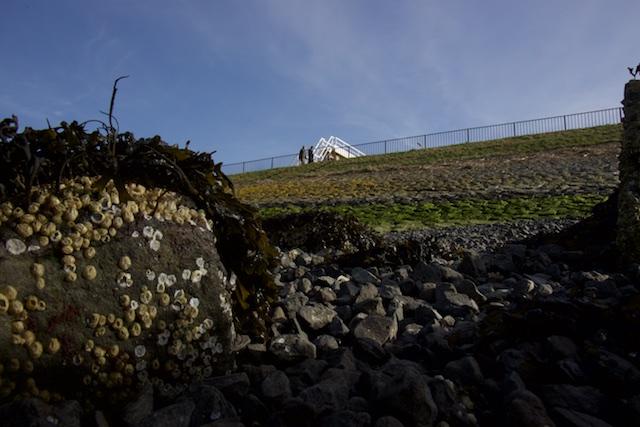 Vol met leven, zeepokken op basaltblokken