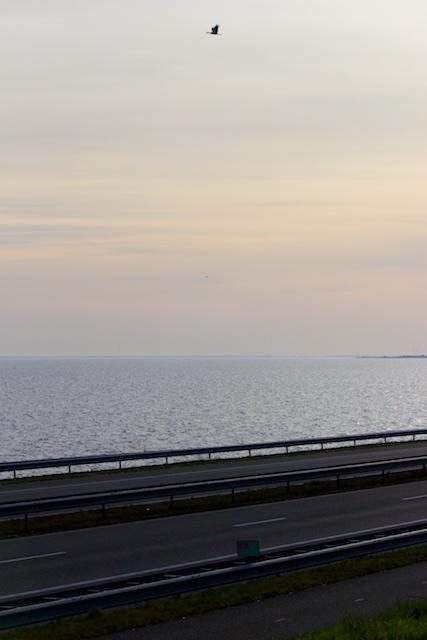 De ooievaar gebruikt de opstijgende lucht boven de Afsluitdijk, hij trekt niet langer naar Afrika