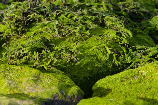 Alleen algen en wiersoorten houden bij deze dynamiek nog stand