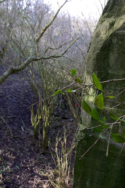 Nog hogerop, de jungle rond de kazematten van verwilderde ligusters