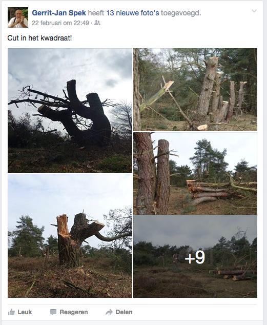 De overwinning van het Salonsocialisme op de natuur/klimaatsubsidie. Ook in Ermelo gaat het bos de biomasssacentrale in