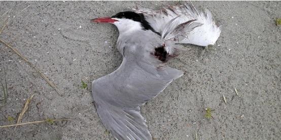 dav38vogelmoord1